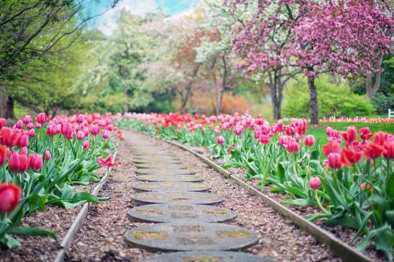 Richtige Bodenaufbereitung im Garten