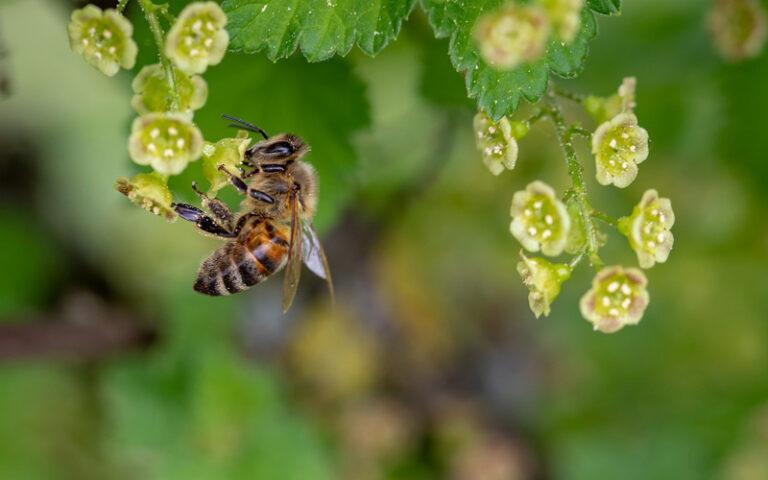 So wichtig sollten uns die Bienen sein
