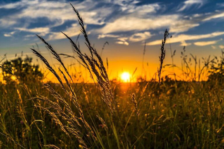 Der effektive Sonnenschutz im Garten – 3 gute Tipps und Anregungen