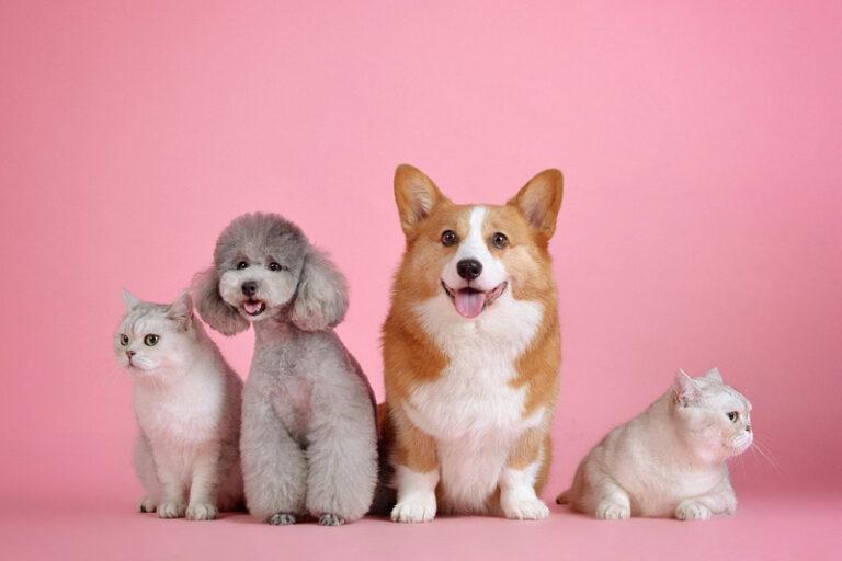 Ergänzungsfuttermittel für Ihr Haustier